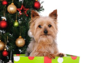 Seasonal safety for your pet