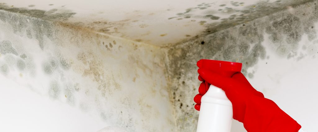How to spot damp in a new home