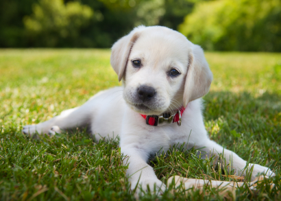 Pets cause costly damage, but help choose where owners live!
