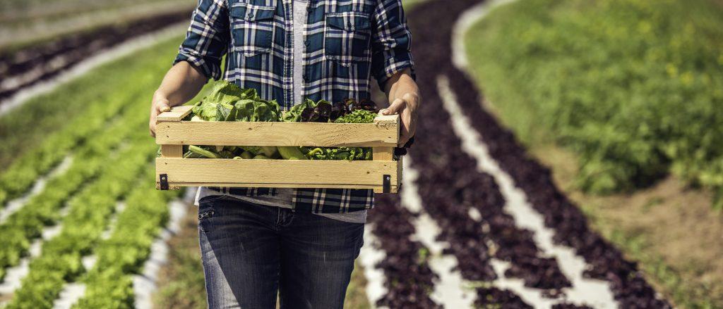 The best veg to grow this summer