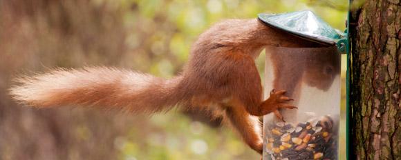 scene_email_squirrel