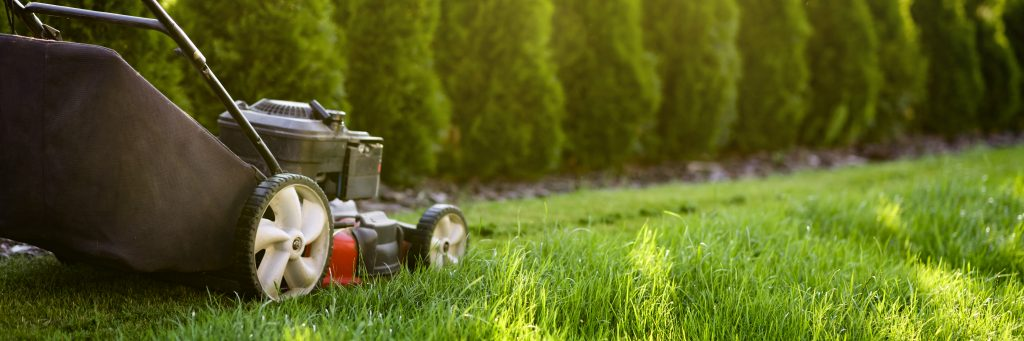Top lawn tips to make your neighbours green with envy!