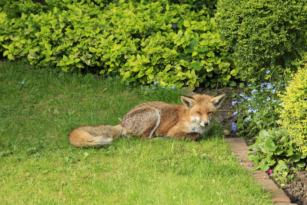 Garden lovers – how to deter unwanted animals from your garden